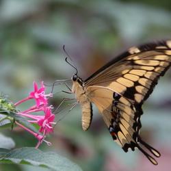 Bewogen vlinder