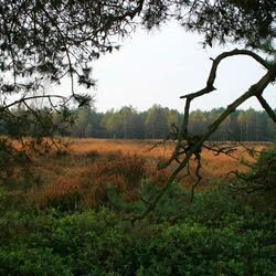 Heide bij Delhuyzen