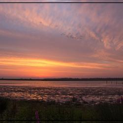 Biesbosch zonsopkomst