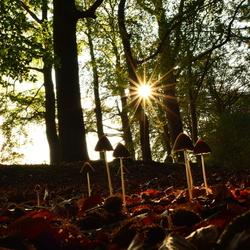 Sunny mushrooms
