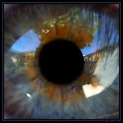 Het oog van een ander