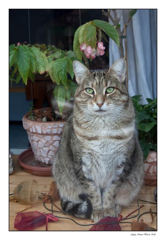 Kat achter raam - Een heel andere foto dan jullie van mijn gewend zijn, maar het plaatje liet me niet los. De kleuren en het kneuterige interieur dat