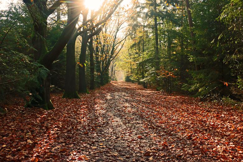 Herfst Sallandse Heuvelrug