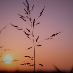 Sprietje in de zon