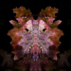 foxy autumn