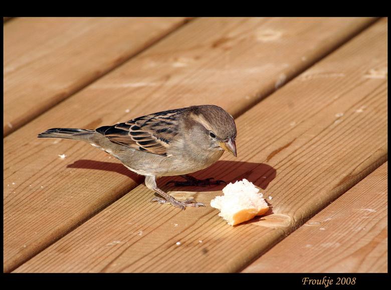 moskje - Fries voor mus ,afgelopen maandag naar het dolfinarium geweest en dit was de mooiste foto die ik had genomen ,had ik misschien voor thuis kun