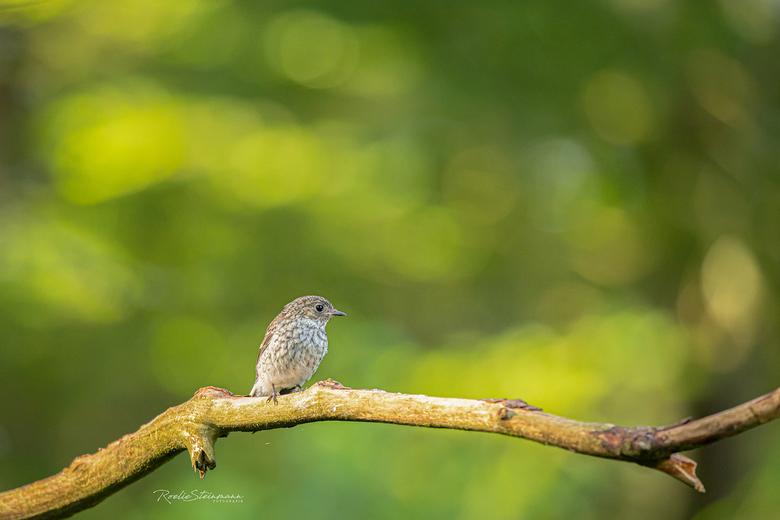 Sitting, waiting, wishing - Dit bijzondere vogeltje streek hier even neer en waar hij op wachte of hoopte....... geen idee. Maar zo kon ik hem wel eve