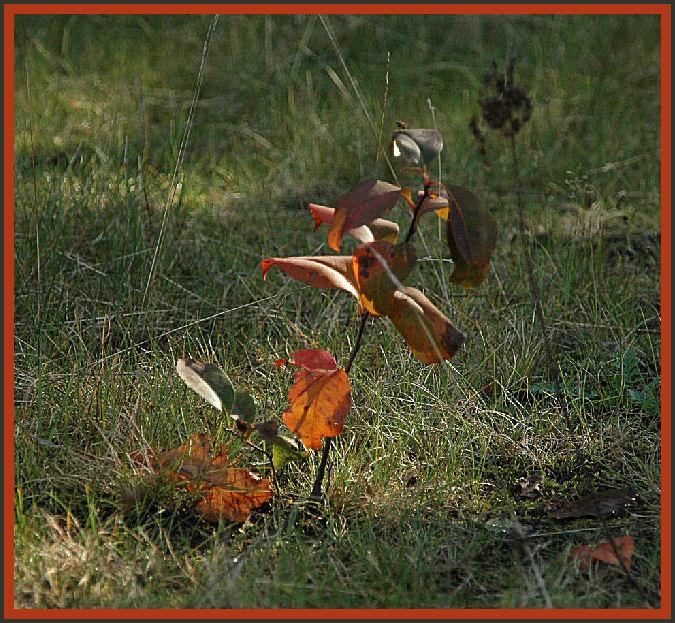 Eenzame stek bijna tot ontbladeren gedoemd - Ik vond deze er zo zielig bij staan op die grote kale vlakte en dan straks ook nog zijn warme blaadjes kw