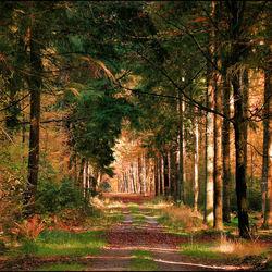 De paden op de lanen door