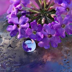 een bloemengroet...