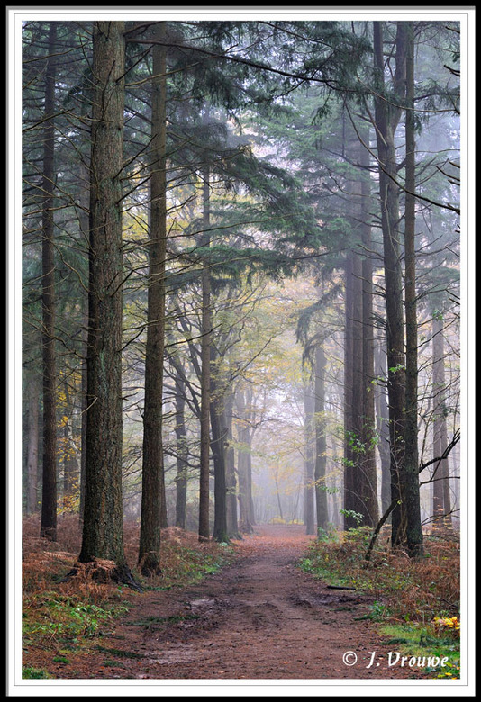dennenpad - stemmig bos bij Lage Vuursche