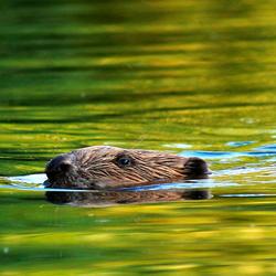 Gliding thrue the water