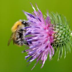 Lekker spul die nectar