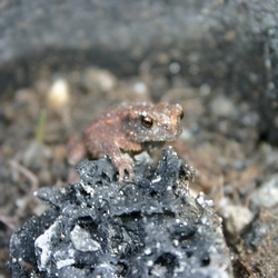frog at the rock