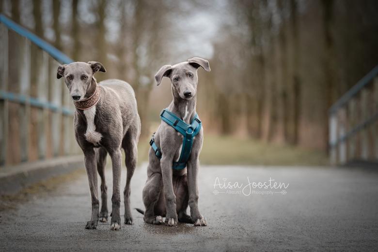 Hailey & Mila - Mijn grote liefdes