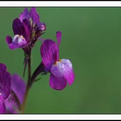 soort orchidee???