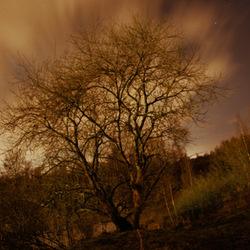 Nachtelijke pracht