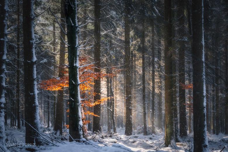 Red. - Nog eentje van mijn tripje naar de Ardennen. Het opwaaien van de sneeuw gebeurde telkens zo snel, dat ik geen tijd had om over een compositie n