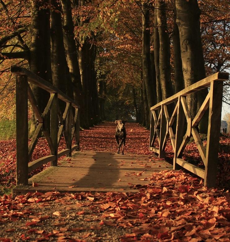 rennend de herfst in -