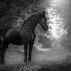 Mooie Zotine in zwart&Wit