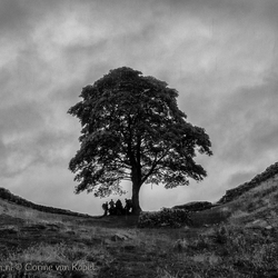 Shelter at Sycamore Gap