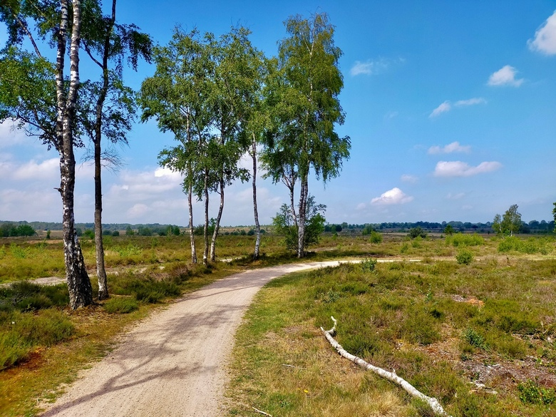 Sallandse heuvelrug - Een mooie dag op de Sallandse heuvelrug met fraaie uitzichten.