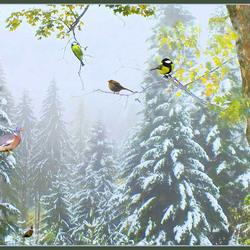 Wintervogelparadijs