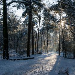winter mastbos 2014