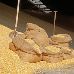 zakken mais en nog meer