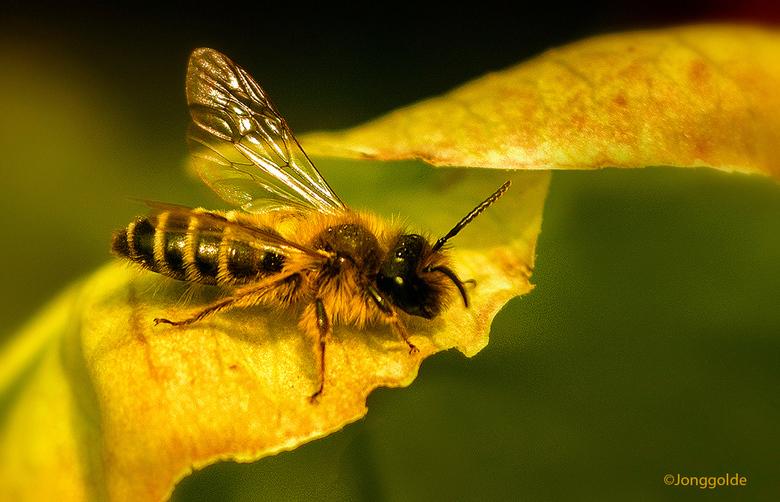 Bijtjes tellen ..,. - Dit weekend geen vogels maar bijen tellen. las ik in de krant of op Internet.