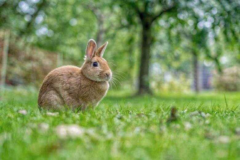 Adriaan ons konijn -