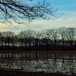 Waterveld
