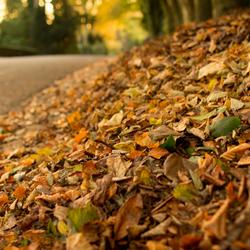 Schone herfststraten