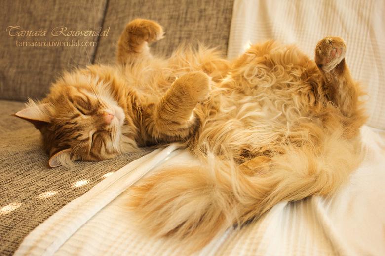 A cat's life - Wil je meer van mijn fotografie zien? Bezoek dan http://tamphotos.deviantart.com/<br /> <br /> Copyright © by Tamara Rouwendal<br />