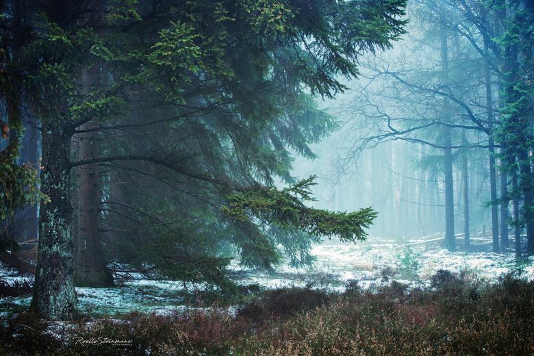 The first snow - Sprookjesachtig mooi was het gisteren, de mist geeft alles een zachte sfeer. <br /> <br /> Dank jullie wel voor de tips over de zwa