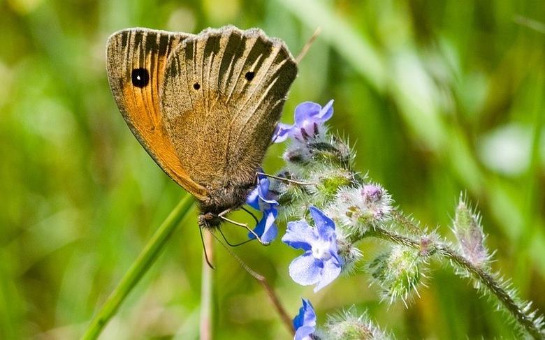 Vlinder - Mijn eerste vlinder in het wild...