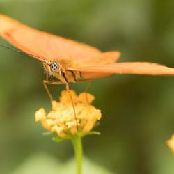 Oranjefan