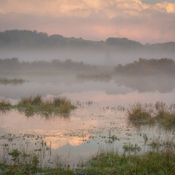 Misty Netherlands