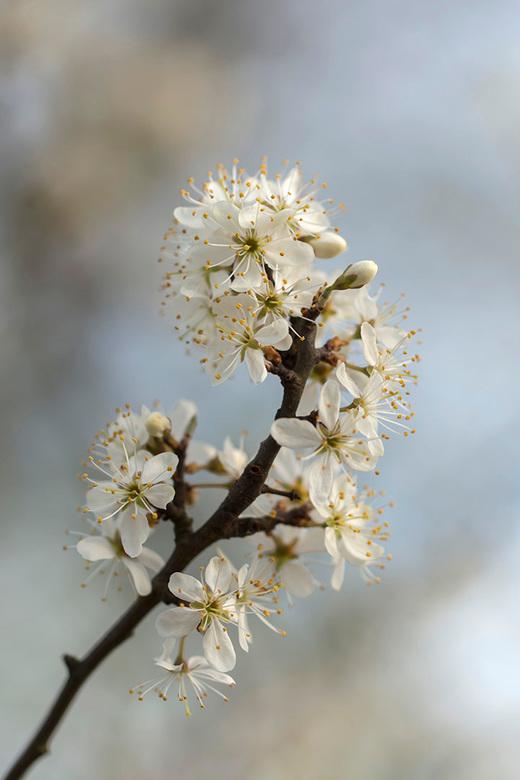 """Volop lente! - Het opnieuw beleven van de wisselingen in de natuur is geweldig mooi  <img  src=""""/images/smileys/smile.png""""/><br /> <br /> Bedankt vo"""
