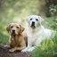 hondenfotograaf-portret-fotoshoot-hond