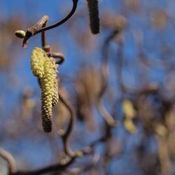 Tijd voor de lente