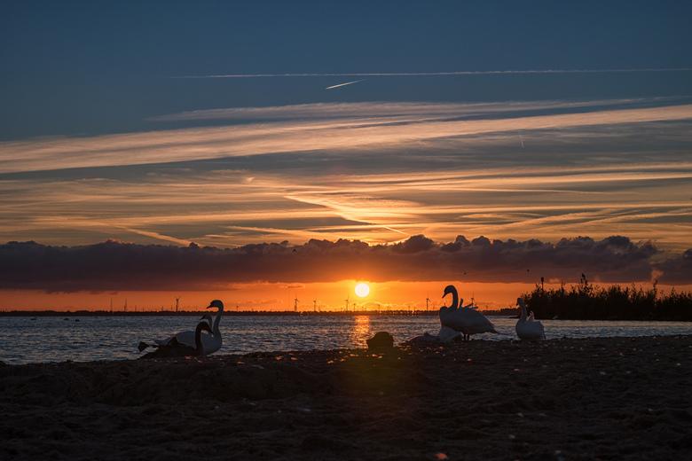 Het Zwanenmeer (in Harderwijk) -