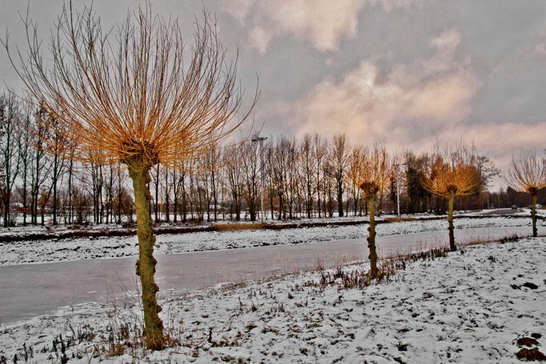 Winter 2013 - Knotwilg