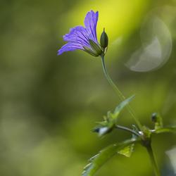 Bloem zoomdag botanische tuin 17-5
