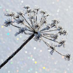 Twinkle Winter