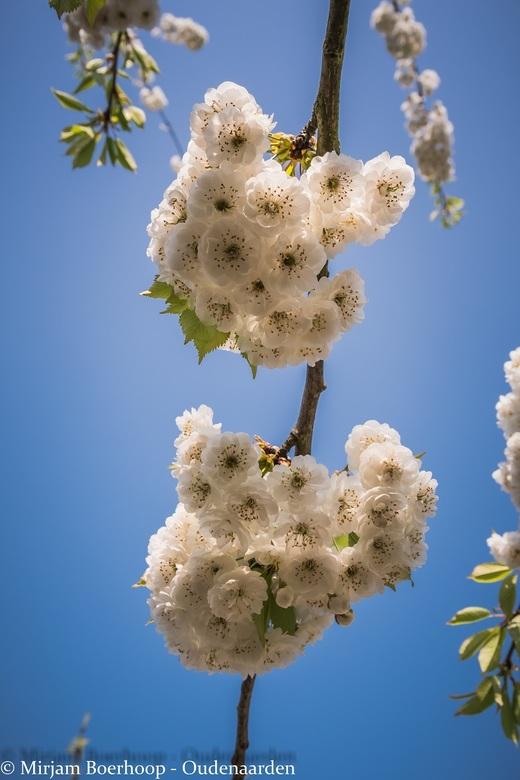Blosseming