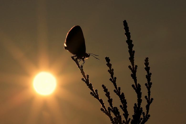 Early in the morning when the sun ... - Vanochtend vroeg ben ik met Daan de Vos en Johan van Gurp een paar uurtjes wezen fotograferen.<br /> Bij het