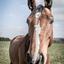 Mijmerend paard