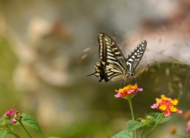 Butterfly - Vlinder vastgelegd in het stoneforest in China