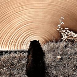 Tunnel? Of Ayla....